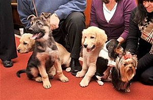 AKC Most Popular Dogs