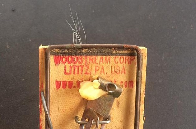 Mouse Trap/Photo by John Falcon