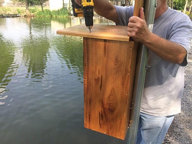 Wood Duck Box Photo  By John Falcon